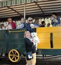 Westies on a Walk on the train
